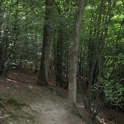 Auf schmalen Pfaden durch den Wald