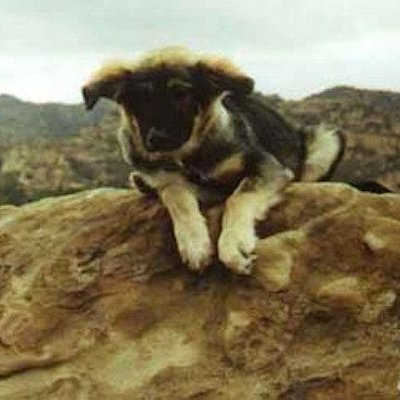 """Young """"Trail Dog"""" made it to the summit"""