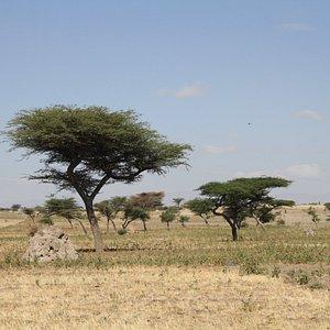Paisaje de la región- (Etiopía)