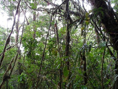 Jungle pics