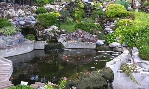 Pretty garden pond and waterfall