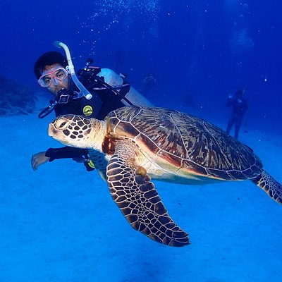 with Honu