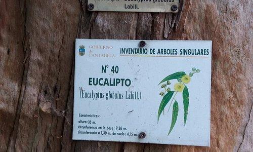 Hay 3 árboles singulares de Cantabria aquí