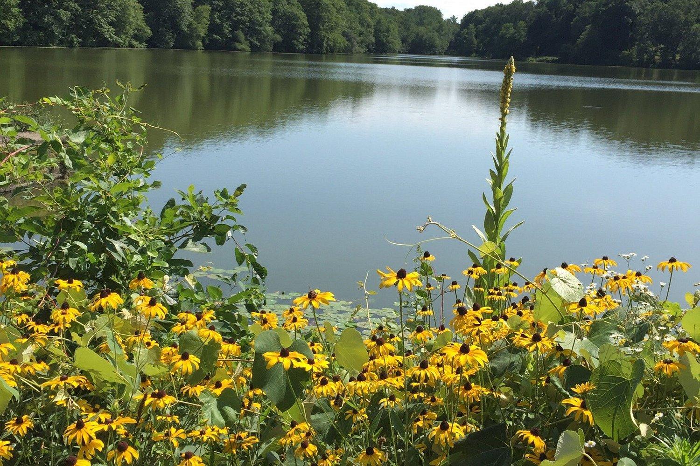 Peaceful park...