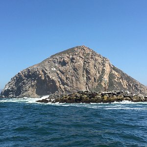 Some photos taken during our harbor and Morro Rock boat tour with Morro Bay Boat Charters; Capt.