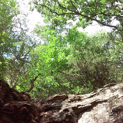 Trees above cave