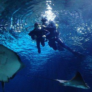 El tanque con rayas y tiburones