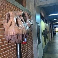Entrada do Museu (depto de geociências da UFRGS)