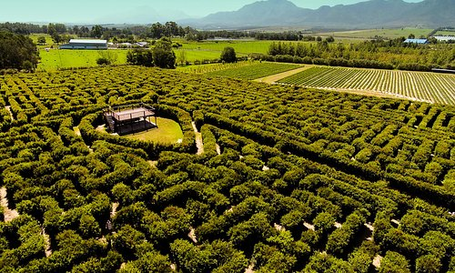 Aerial view of the hedge maze