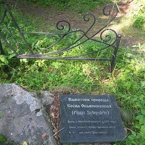 Памятник природы Сосна обыкновенная