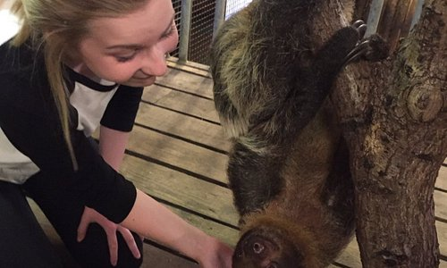 Sloth experience