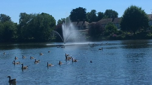The beautiful lake in Raphael Park. The ducks are amusing to watch.