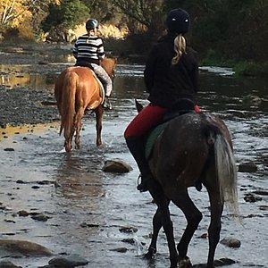 Explore the Waianakarua river, pass the Taniwha lair, Hobbit Chairs and Moeraki Boulder nursery