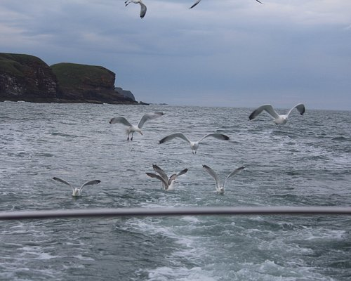 Arbroath Angling -Fishing on the North Sea- seagull style