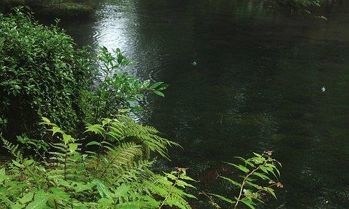 雨に濡れた草が池辺ひっそりと