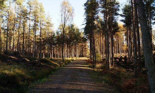 Devilla Forest.
