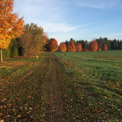 Fall at Brantwood