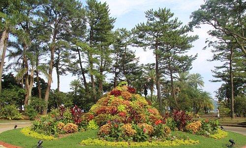 青島亜熱帯植物園 ロータリー花壇