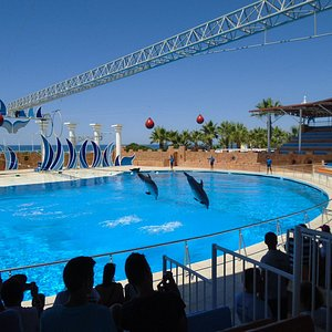 Csodálatos volt látni, amint ezek az okos delfinek végrehajtották a feladataikat!