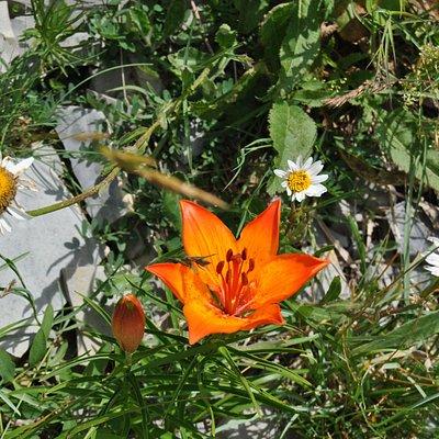 Flora spontanea