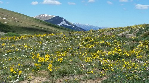 Top of Independence Pass