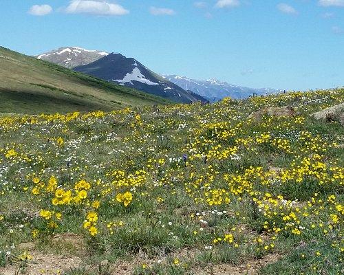 Top of Independence Pass