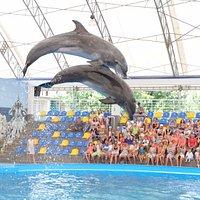 Шоу дельфинов в Коблевском дельфинарии НЕМО