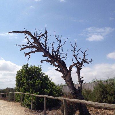 В природном парке Гальвани обитают зайцы, черепахи, различные птицы, утки.