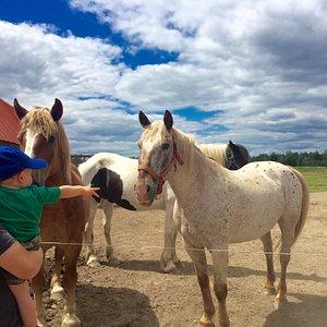 Wagon Wheel Ranch Petting Farm, horse and pony trail rides. Fun for everyone!!