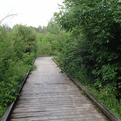 Nature trail - Boardwalk