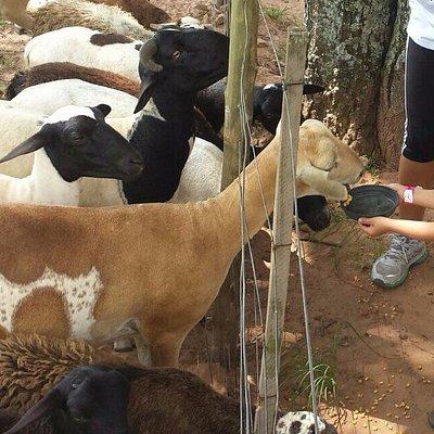 Alimentando animais