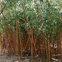 Un beau jardin de Bambous, arbres et fleurs