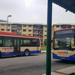 Rapidkl buses