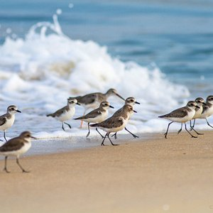 This is purely a bird beach and I expect people, visitors not to disturb birds, as its their are
