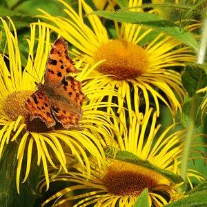 flora and fauna !