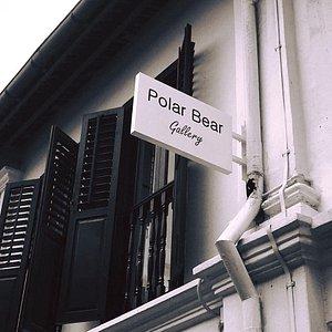 Polar Bear Gallery