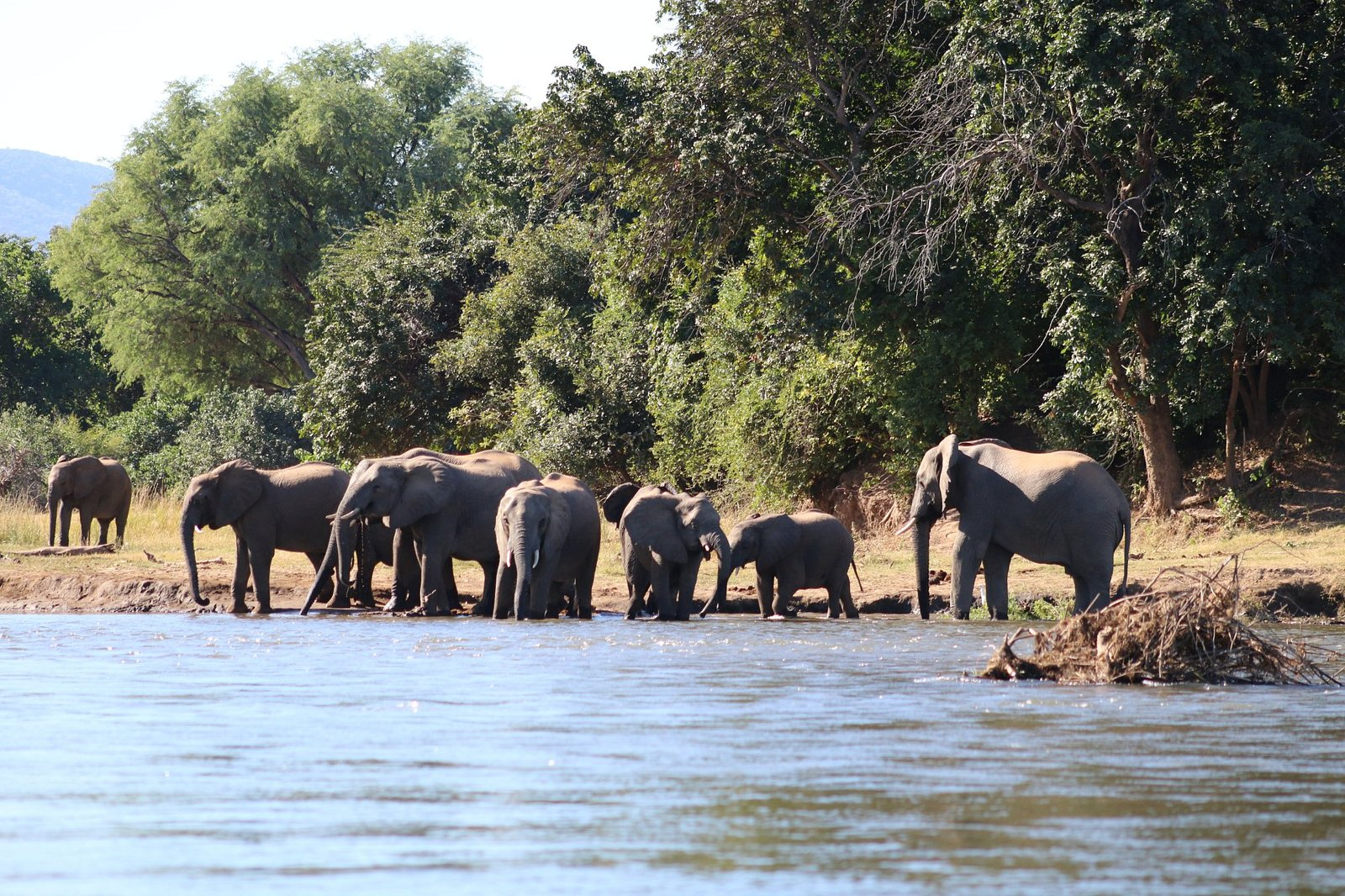 Elephants on the river bank just a short distance from the lodge