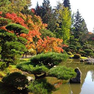 Autumn at the Japanese garden