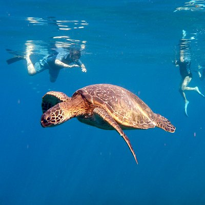 Snorkeling with the turtles