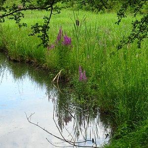 een slootje bij het Haarlemmermeerse Bos