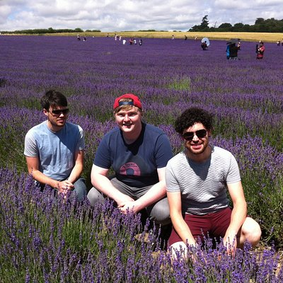 Look at these three gorgeous young men enjoying the lavender fields!
