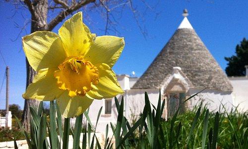 Un iris e sullo sfondo Panaché, una delle case dei Giardini di Pomona