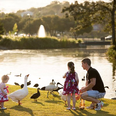 feeding birdlife at Lake Alford
