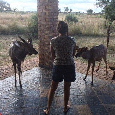 Feeding the Wild Animals