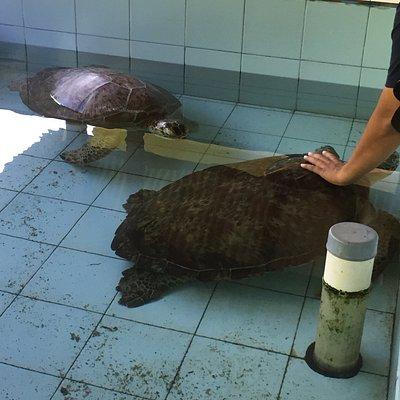 Vi adopterede den lille skildpadde, og var med til at sætte den ud i havet. Fik lov at holde en