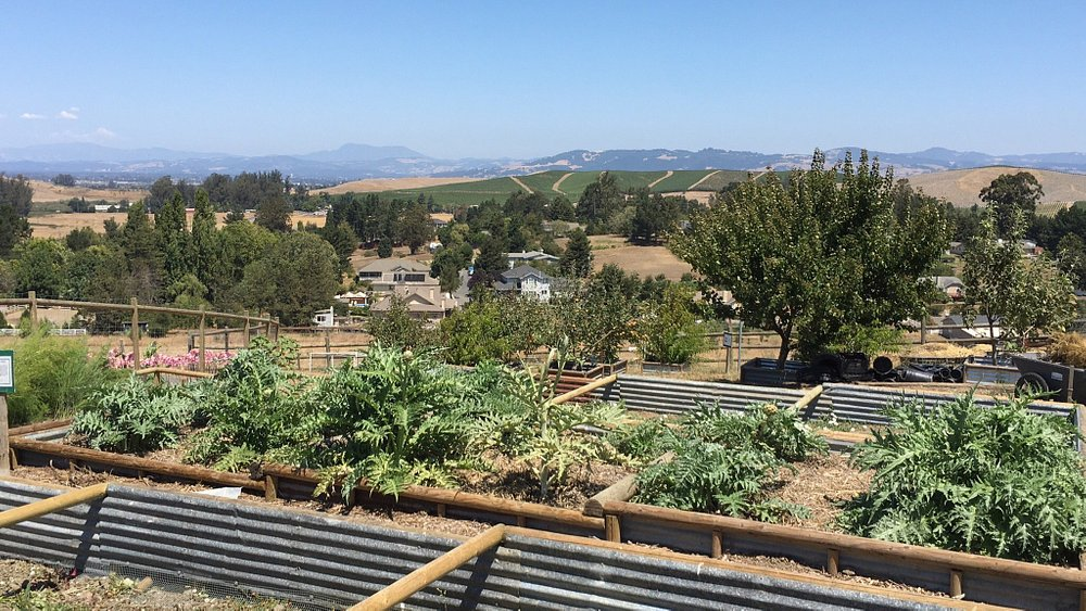 They are growing a garden to sell the produce to help support the wildlife rescue efforts.