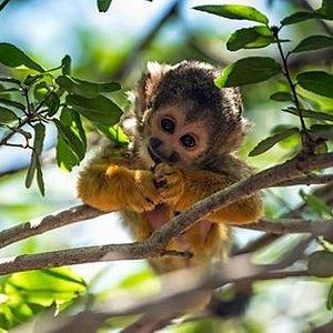 Monkey Forest Yodfat