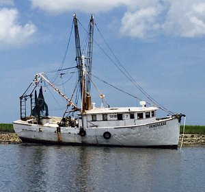 Cumberland Island's wild horses, Dolphins on a beautiful afternoon and a stranded shrimp boat ap