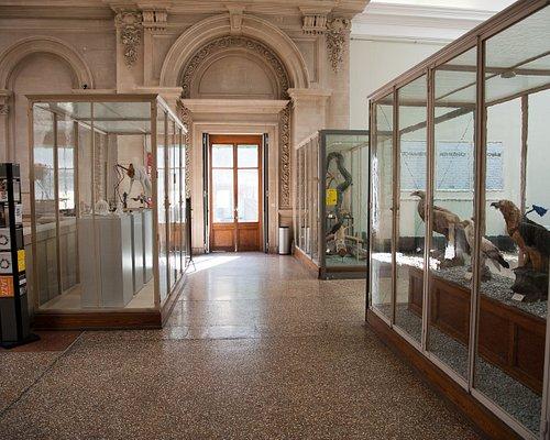 Entrée du musée - Museum's entrance