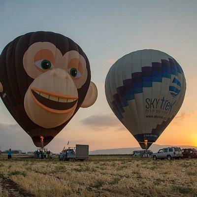 Zulu the flying monkey